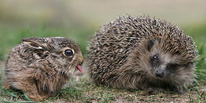 cute-animal-tongues-mlem-260-58943b289497f__700