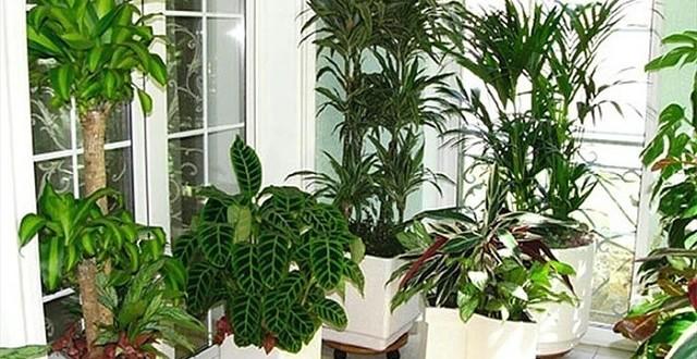 магические свойства растений