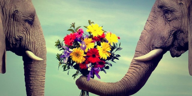 цветы женщинам