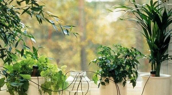 Автоматический полив ваших домашних цветов
