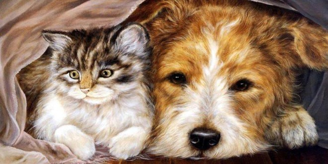 Animals Friends Sweet Dog Best Cat Beautiful Munchkin Cats Pictures Photos